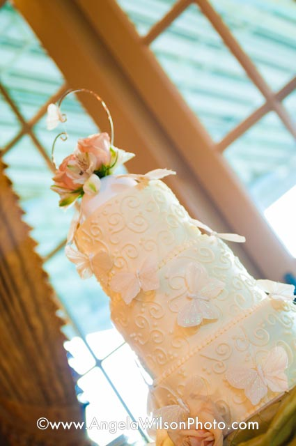 My butterfly cake w/ photo by Angela Wison Photography!